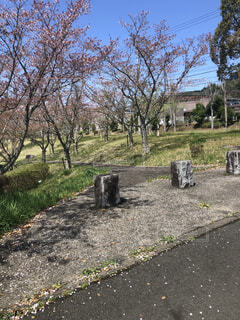 空,屋外,樹木,地面,墓,草木,墓地