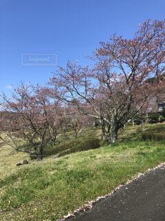 空,公園,花,春,屋外,草,樹木