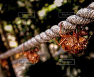 夏,動物,樹木,クモ,トンボ,昆虫,セミ,蝉の抜け殻