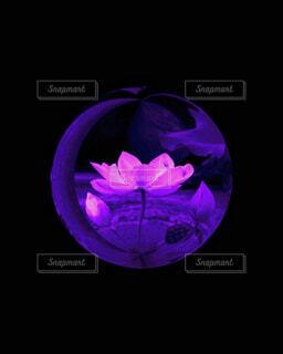 花,紫,暗い,アート,新緑,絵画,ガラス玉,明るい,カラー,水晶,草木,琥珀,フローラ