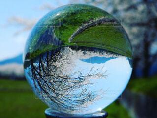 風景,春,桜,屋外,緑,田舎,桜並木,景色,ガラス,草,水晶玉,球
