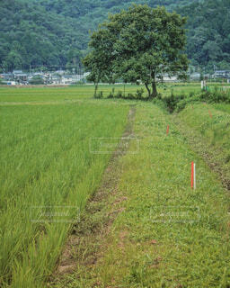 風景,屋外,緑,田舎,景色,草,樹木,新緑,田んぼ,田舎道,草木,ファーム,畦道