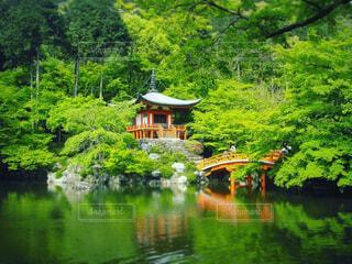 自然,風景,森林,屋外,京都,湖,緑,神社,水面,景色,家,樹木,新緑,お寺,寺,寺社,草木