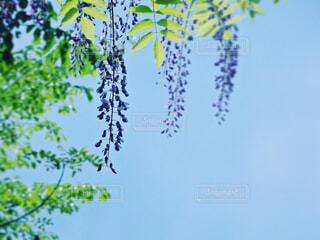 空,花,森林,青,紫,山,景色,藤,新緑