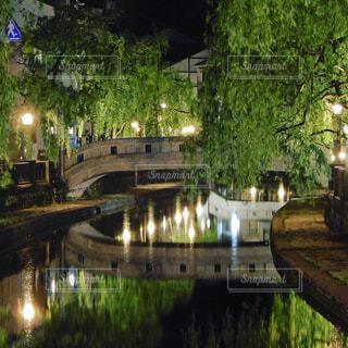 夜景,屋外,湖,水面,樹木,城崎温泉,運河,柳,城崎,温泉街,枝垂れ柳