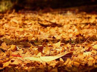 食べ物,建物,秋,夕日,紅葉,夕暮れ,葉,山,草,銀杏,種,カエデ