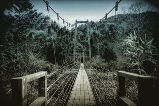 自然,風景,空,橋,屋外,森,林,山,景色,樹木,鉄道,吊り橋,草木