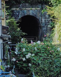 花,屋外,森,緑,線路,田舎,景色,樹木,道,新緑,列車,トンネル,草木,ガーデン