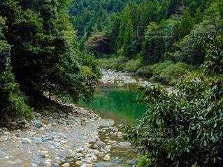自然,風景,森林,木,屋外,湖,森,緑,川,水面,水辺,山,景色,樹木,新緑,運河,草木,山腹,水資源,河川地形