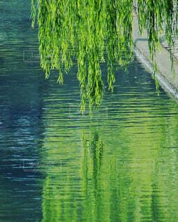 自然,花,屋外,湖,森,緑,線路,水面,池,田舎,景色,反射,樹木,新緑,柳,草木,枝垂れ柳,ウィロー