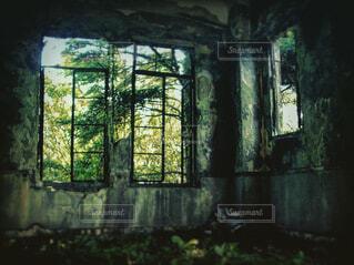 建物,窓,林,景色,樹木,新緑,絵画,廃墟,石,蔦,草木,放棄
