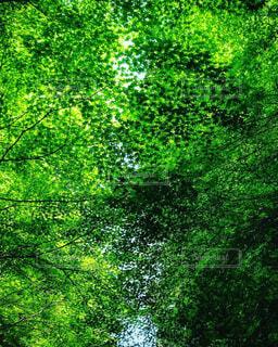 自然,森林,屋外,緑,葉っぱ,葉,林,景色,草,樹木,新緑,草木
