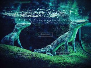 水族館,動物園,ワニ