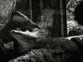 動物,水族館,像,動物園,トカゲ,爬虫類,恐竜,ワニ,黒と白