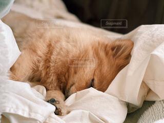ベッドの上で寝ている猫の写真・画像素材[4308267]