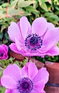 花,屋外,花びら,草木,ブルーム,フローラ