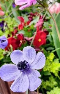 花,屋外,草木,ガーデン,ブルーム,フローラ