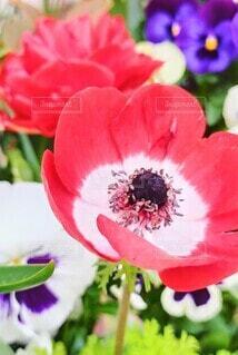 花,花びら,草木,ブルーム,フローラ