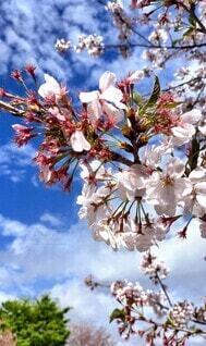 空,花,春,屋外,花束,青い空,樹木,草木,ブルーム,ブロッサム