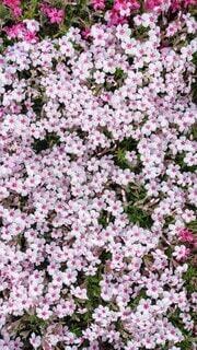 花,屋外,草木,フローラ