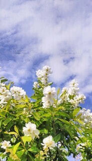 花,青空,草木