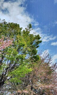 空,屋外,雲,樹木,草木