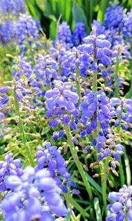 花,春,屋外,青,景色,草木,ガーデン,フローラ
