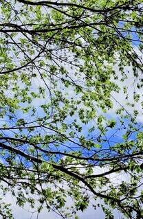 自然,空,屋外,樹木,草木