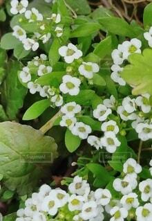 花,緑,白,草木,フローラ