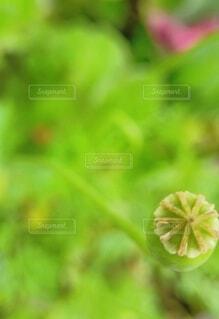 花,緑,草木