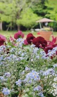 花,春,屋外,花束,草,樹木,草木,ガーデン