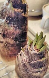 野菜,食材,竹の子