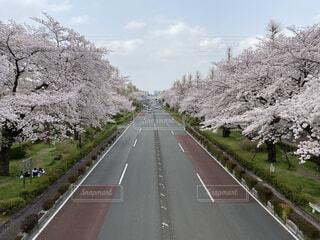 風景,空,花,春,屋外,ピンク,青空,道路,草,樹木,道,一本道,さくら,ブロッサム