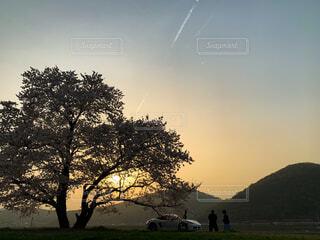 自然,風景,空,桜,屋外,太陽,雲,夕焼け,夕暮れ,車,幻想的,夕方,花見,山,景色,シルエット,オレンジ,草,樹木,逆光,飛行機雲,岡山,マジックアワー,ひこうき雲,一本桜,日暮れ,さくら,岡山市