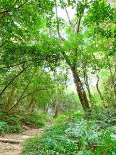 緑生い茂る登山道の写真・画像素材[4320444]