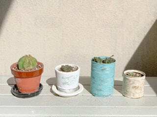 多肉植物とサボテンの写真・画像素材[4332872]