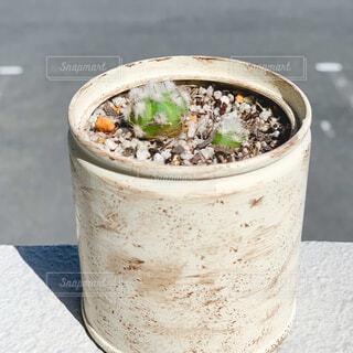 屋外,かわいい,DIY,ガーデニング,植木鉢,カップ,サボテン,観葉植物,ペイント,リメイク,塗装,リメイク缶,ミニサボテン,廃棄物容器