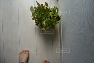 花,屋内,足,植木鉢,観葉植物,草木,屋内栽培