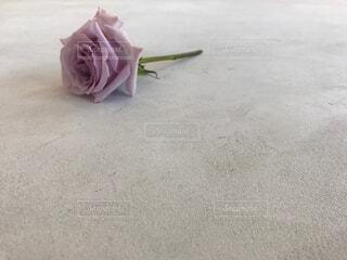 花,ピンク,一輪,バラ,薔薇,床