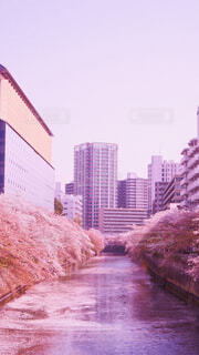 空,建物,花,桜,屋外,樹木,旅行,高層ビル,目黒川