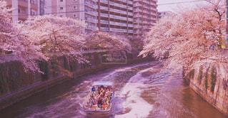 目黒川の写真・画像素材[4309084]