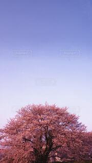 自然,空,花,秋,桜,屋外,樹木,草木