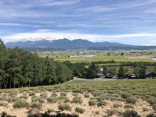 自然,風景,空,屋外,緑,雲,北海道,山,景色,草,樹木,富良野,草木