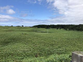 自然,風景,空,屋外,緑,雲,景色,草,樹木,農業,草木,ファーム