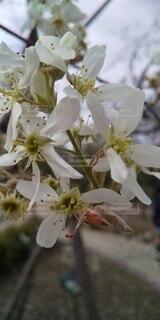 花,白,花びら,草木,ブルーム,フローラ