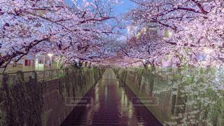空,花,春,湖,水面,樹木,ブロッサム