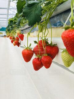 食べ物,いちご,フルーツ,果物,ブドウ,ベリー,スーパーフード,イチゴ,種なしの果実