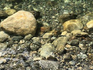 屋外,川,葉,山,岩,カメ