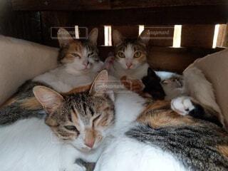 猫,動物,屋内,白,景色,子猫