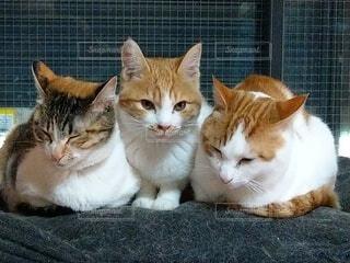 猫,動物,子猫,ネコ科